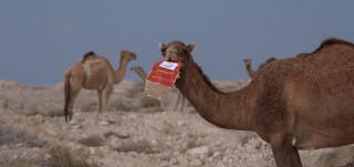 Stillkuva Alia Faridin videoteoksesta. Kuvassa kaksi kamelia.